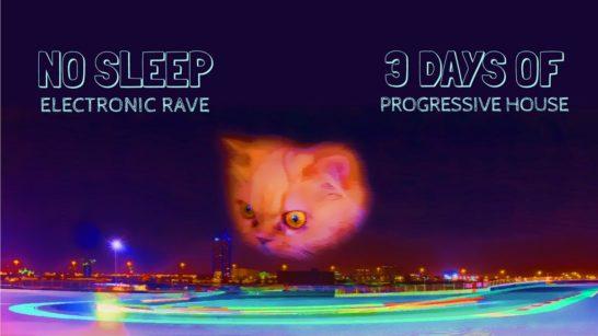 Cat gazing at night city