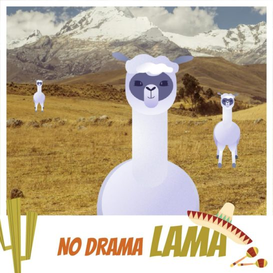 Funny Lamas in Pampas