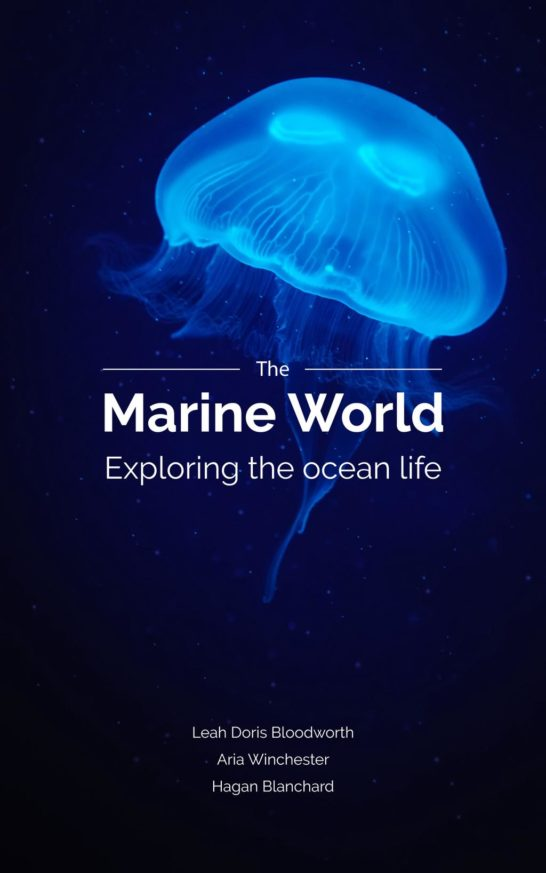 Jellyfish Swimming in Sea